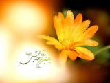 مولد الإمام الحسن بن علي المجتبى (عليه السلام) 07