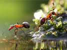 Ants are incredibly smart and powerful!