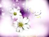 مولد الإمام علي الهادي عليه السلام 07